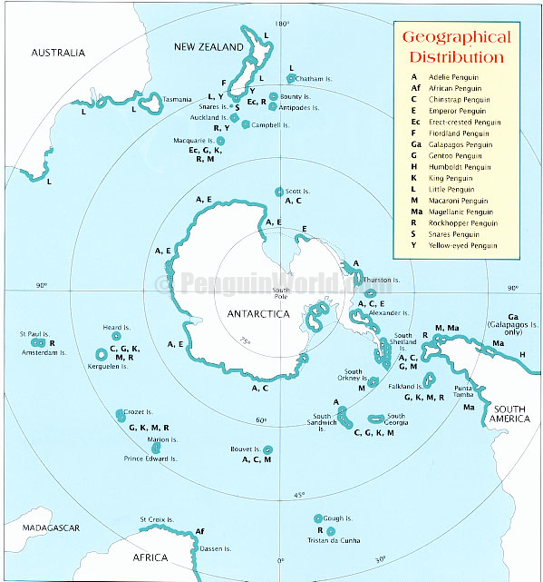Static map of the geographical distribution of penguins types of penguin publicscrutiny Images