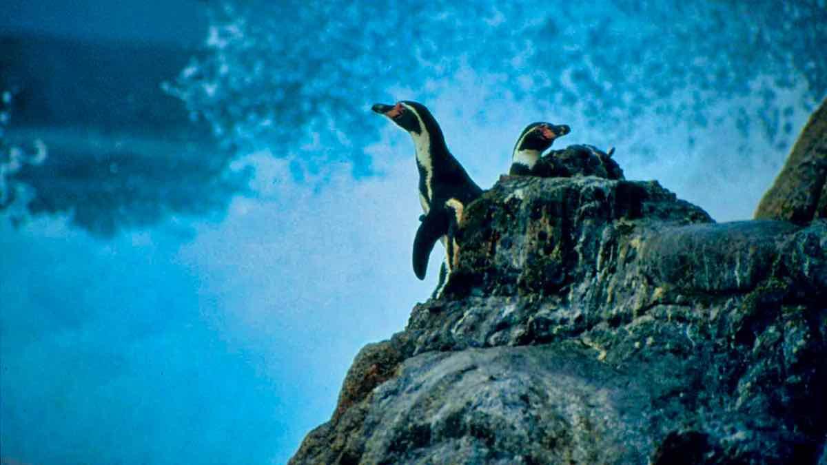 PenguinWorld